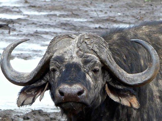 "Tarangire National Park, Tanzania: Majestic with ""attitude"""