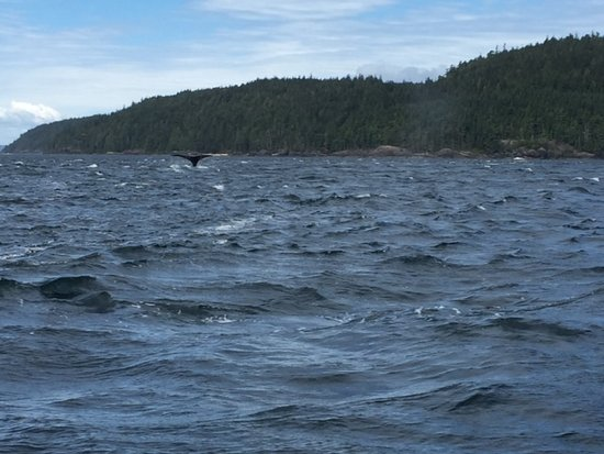Port McNeill, Canada: Humpback whale viewing!