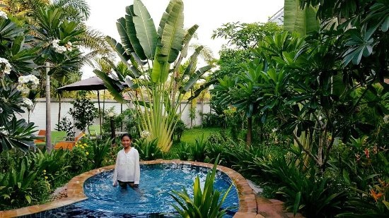Our tropical green garden and swimming pool for kids ...
