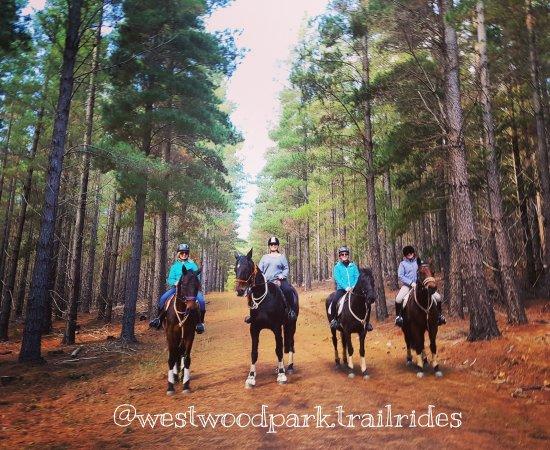 Aldinga Beach, Australia: Trail rides Adelaide