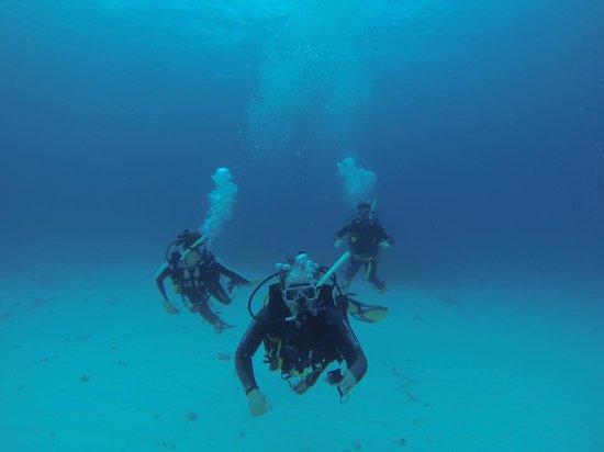 Lady Elliot Island, Australia: Scuba diving