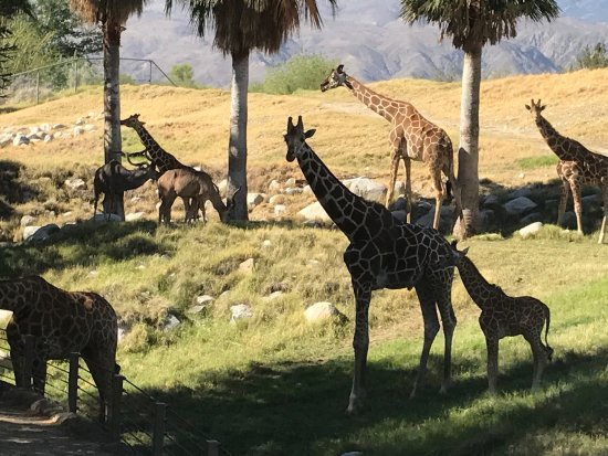 Living Desert Zoo & Gardens: photo0.jpg