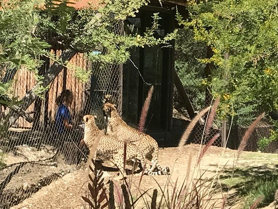 Living Desert Zoo & Gardens: photo1.jpg
