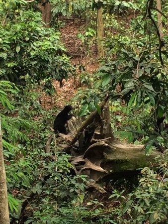 Bornean Sun Bear Conservation Centre: photo0.jpg