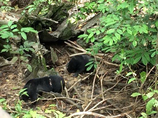 Bornean Sun Bear Conservation Centre: photo1.jpg