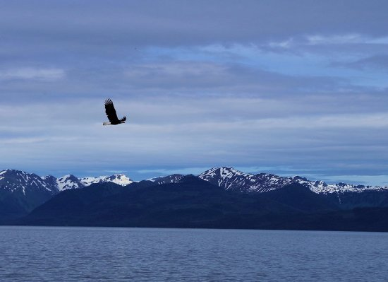 Chichagof Island: Eagles were on the beach, unfortunately we inadvertently scared them off.