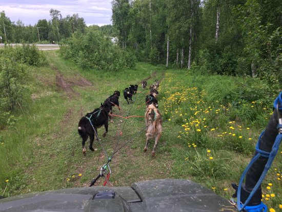 Dream a Dream Premier Iditarod Kennel afbeelding