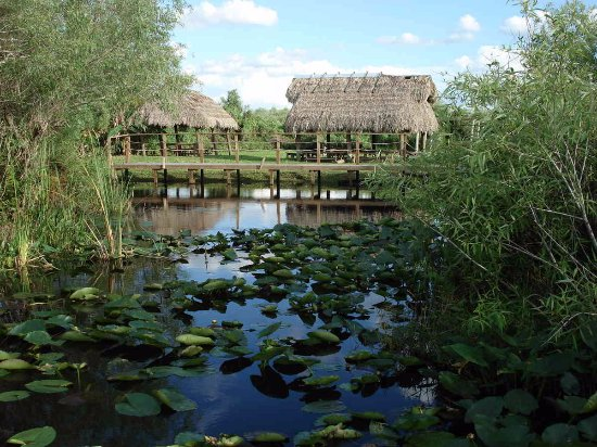Big Cypress National Preserve: The Seminole indians have occupied hammocks for hundreds of years.