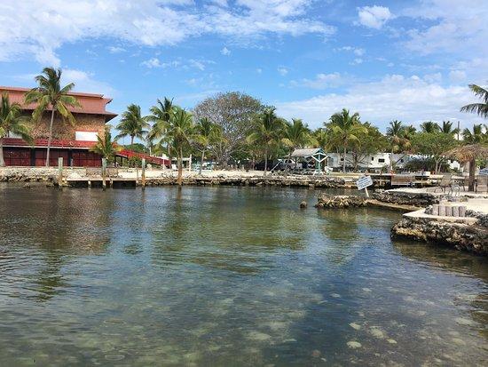 Blackfin Resort and Marina: photo8.jpg