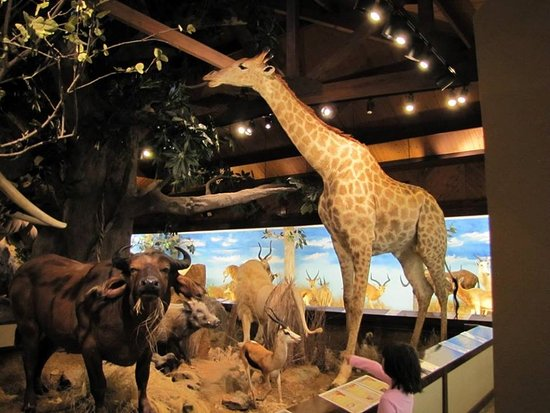Harber Wildlife Museum Photo