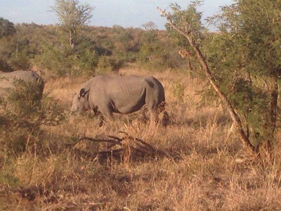 Imbali Safari Lodge: photo4.jpg