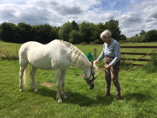 Tarrant Monkton, UK: We have grqazing for horses available