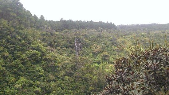 Curepipe: Удивительная природа Маврикия!