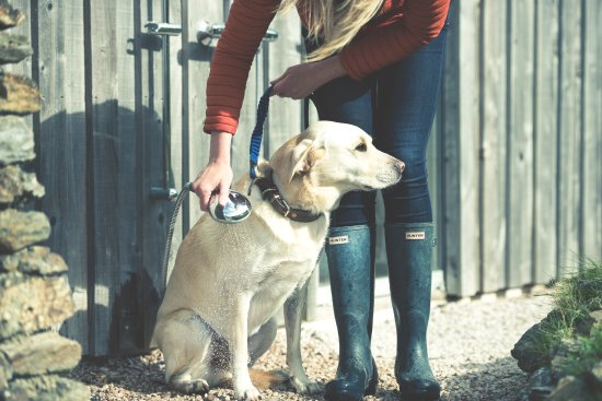 Soar Mill Cove Hotel: Dog Friendly With Heated Outside Dog Shower