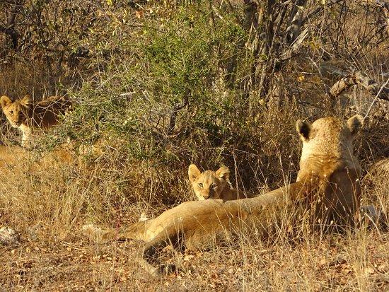 写真ティムババツィ・プライベート自然保護区枚