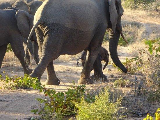 Timbavati Private Nature Reserve, South Africa: photo3.jpg