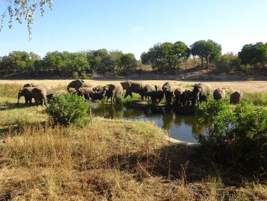 Timbavati Private Nature Reserve, South Africa: photo7.jpg
