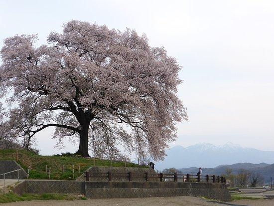 Nirasaki Photo