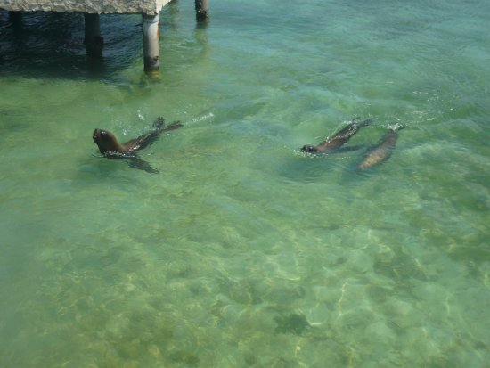 Dolphinarium, Cayo Naranjo: Sea lions (Oskar and his mum)