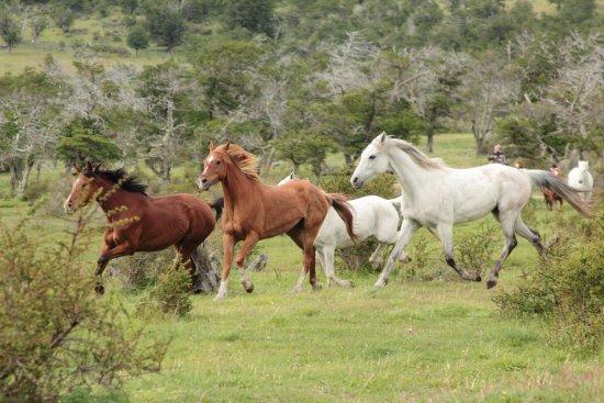 Pingo Salvaje: tropilla caballos árabes
