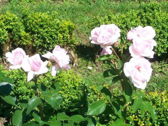 Le Bourget-du-Lac, Frankrig: Belles roses du Jardin