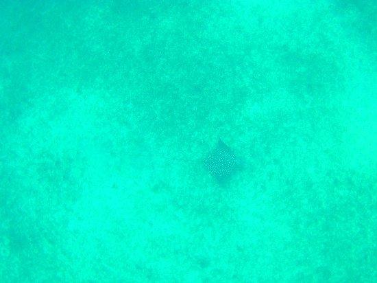 Oyster Pond, St. Maarten-St. Martin: IMG-20170611-WA0001_large.jpg