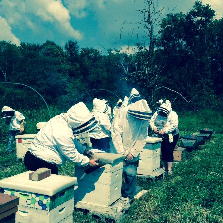 Berea, KY: Students harvesting honey on the College Farm for the Farm Store