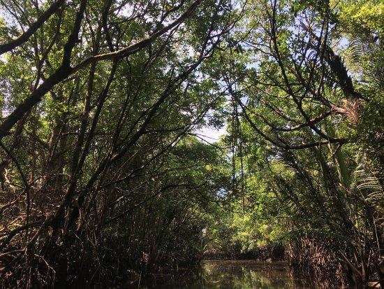Cherating River : photo8.jpg