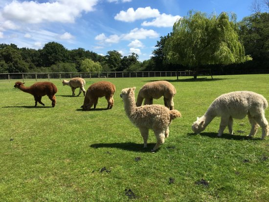 ‪Pennybridge Farm Alpacas‬