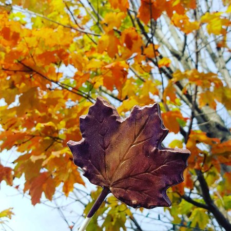 Lenox, ماساتشوستس: Fall in the Berkshires complete with a chocolate leaf pop 