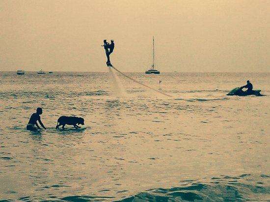 Blue Sky International Youth Hostel: Da Huang the surfing dog