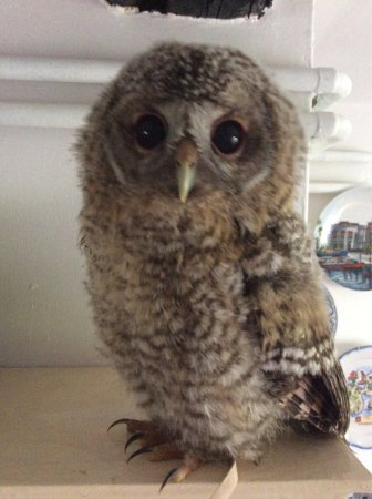 Bolton by Bowland, UK: Pheonix just loves The Coach & Horses it's a real hoot.