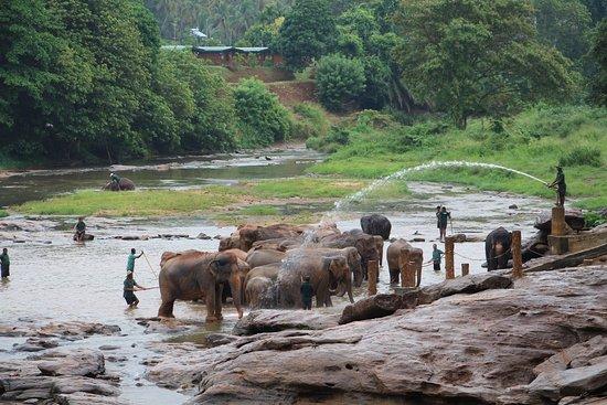 Pinnawala Image