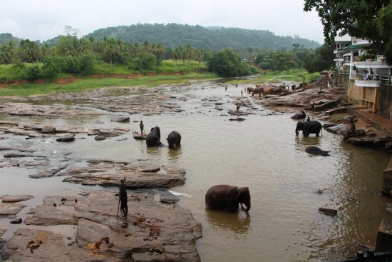 Pinnawala Imagem