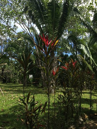 Punta Gorda, Belize: photo6.jpg