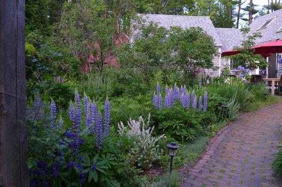 Йорк, Мэн: Garden with patio in background