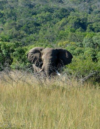 Zululand, Νότια Αφρική: One of a few we saw