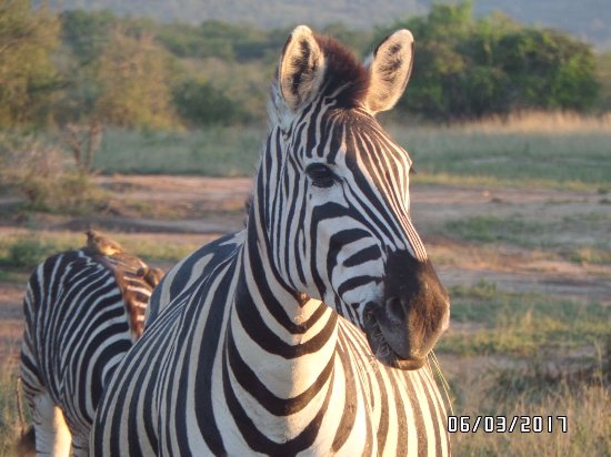 Zululand, South Africa: They are everywhere