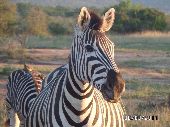 Zululand, Νότια Αφρική: They are everywhere