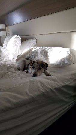 Crowne Plaza Ventura Beach: Dog friendly!