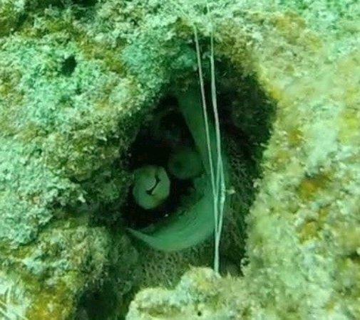 Bilinda Charters : octopus