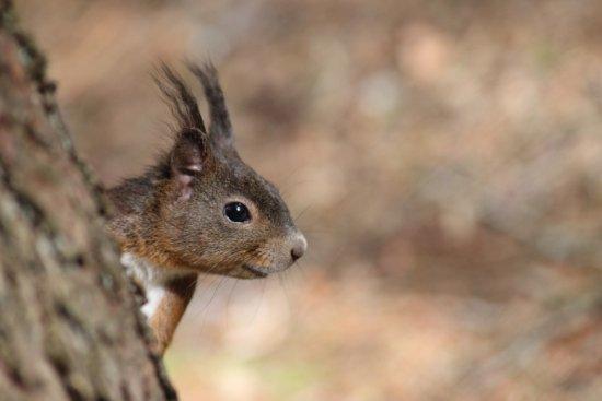 Alpenpark Resort: Local wildlife