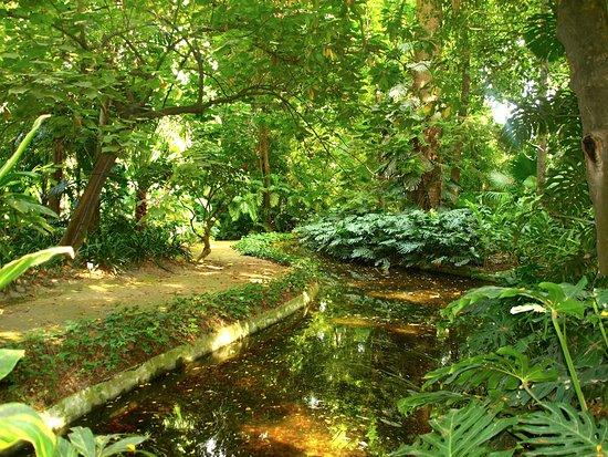 Jard n bot nico m laga billede af jardin botanico for Jardin de la conception malaga