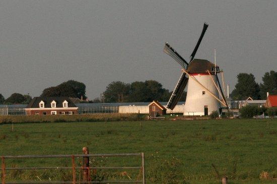 Schipluiden, Nederland: De Groeneveldse Molen