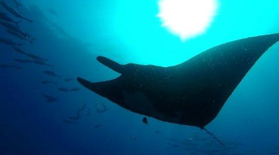 Osa Peninsula, Costa Rica: Osa Divers