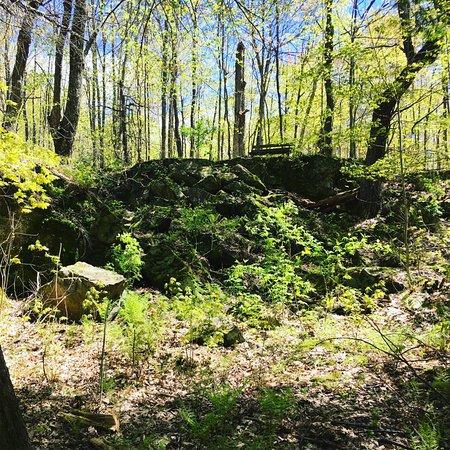 Delta, Kanada: The Woods
