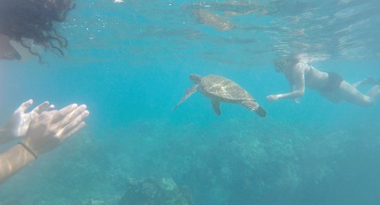 Blue Water Rafting: Swimming with sea turtles in Maui