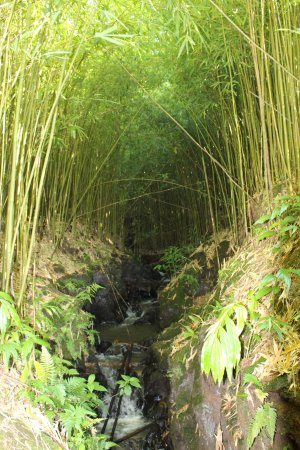Bamboo Forest : a small river in the forest
