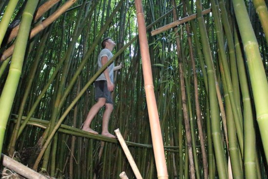 Bamboo Forest : just an example of the massive sticks you will find