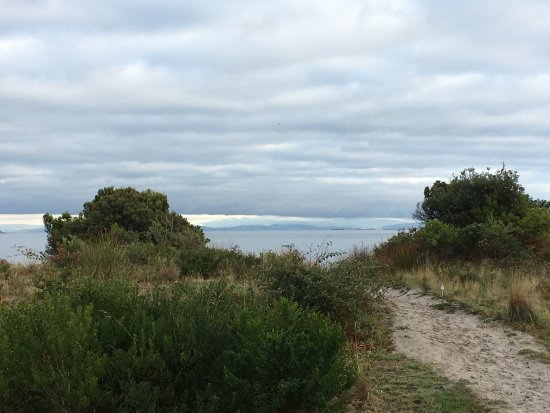 White Beach, أستراليا: White Beach (out the back)